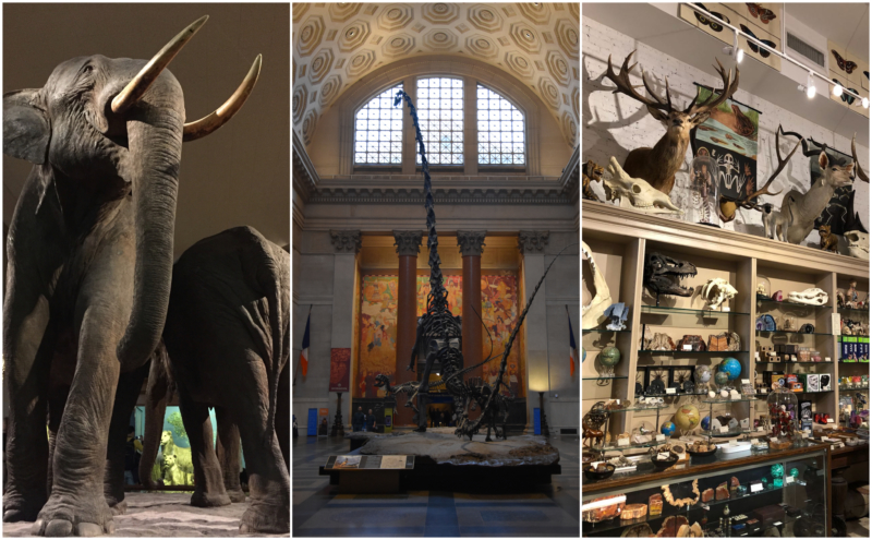 New York Reis tips American Museum of Natural History www.jaimyskitchen.nl